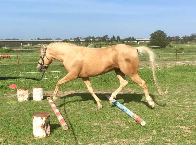 osteopathy_trot_poles_4