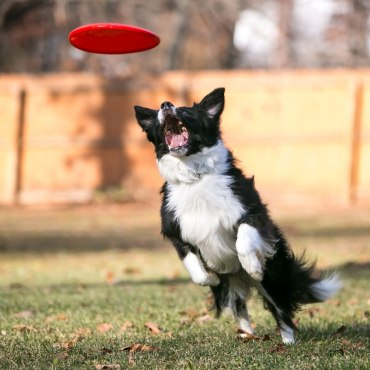 Canine Athlete - Basic Warm-up and Cool-down Guide