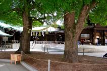 Meiji Shrine - Tokyo12