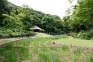 Meiji Shrine - Tokyo5