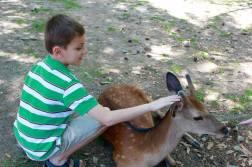 Nara Park1