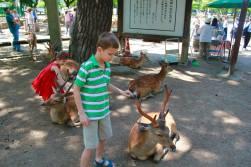 Nara Park10
