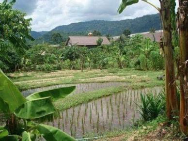Thai Village64