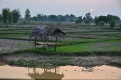 Thai Village74