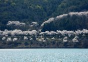 Bomun Lake Gyeongju 2