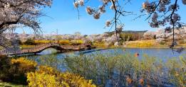 Bomun Lake Gyeongju 4