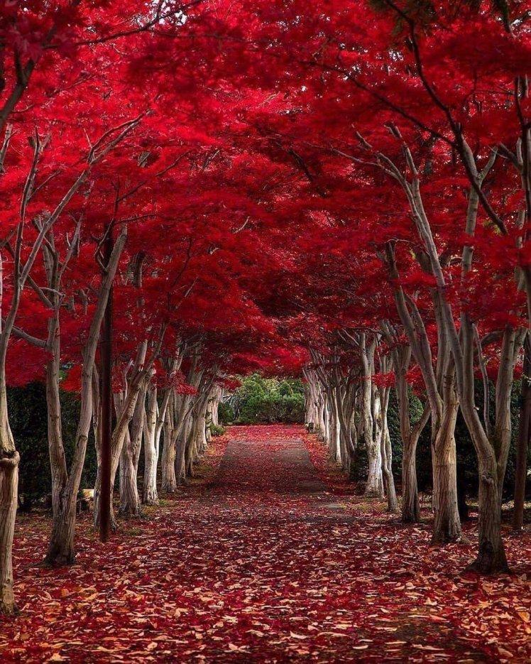 Tunnel of love Hokkaido