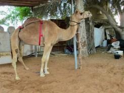 ABU DHABI HERITAGE VILLAGE22