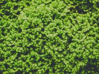 Photo by icon0.com on Pexels.com