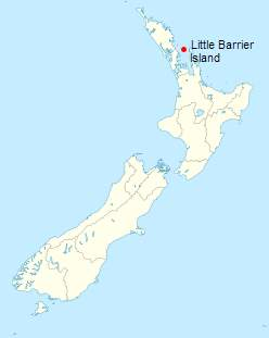 Little Barrier Island