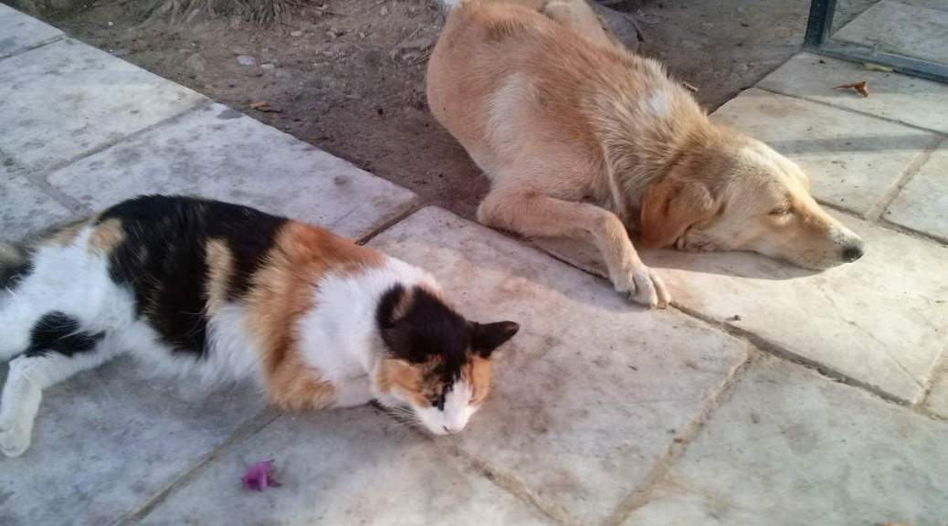 A cat and a dog sleeping