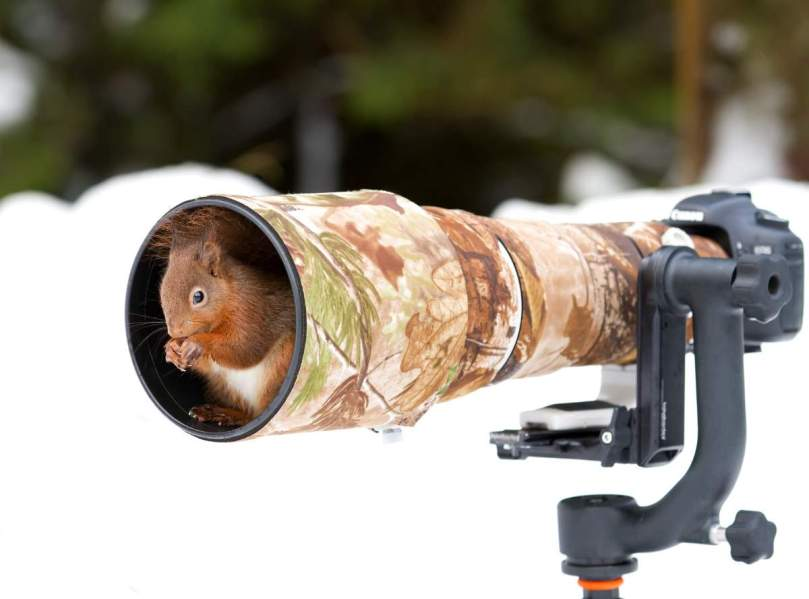 A red squirrel and camera