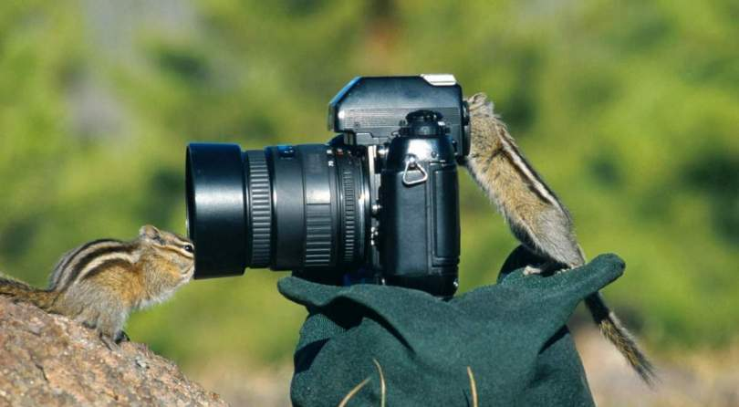 Two chipmunks and a camera
