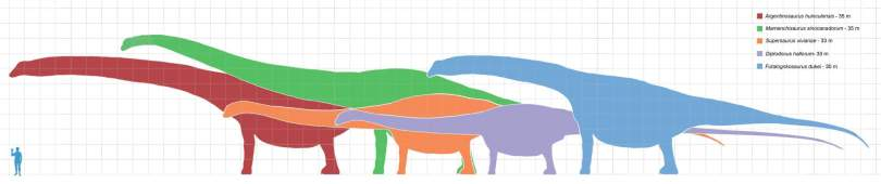 Longest dinosaurs