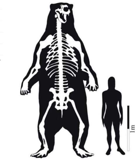 Largest prehistoric mammals - South American giant short faced bear