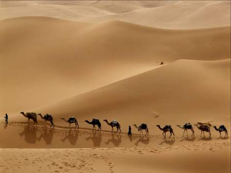 Earth facts - A Caravan in Libyan Desert