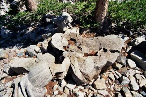 Recently Lost Natural Wonders - Stump of Prometheus