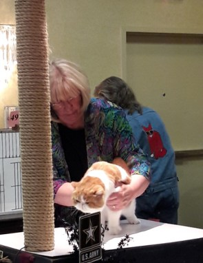 Orange n white cat