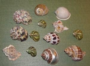 Shells on display