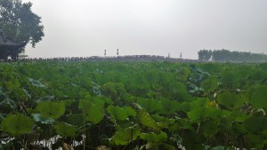 West Lake Lotus Flowers Hangzhou China