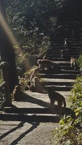 Zhangjiajie National Forest Park China Golden Monkey