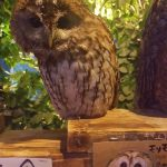 Tokyo Animal Cafe Owl
