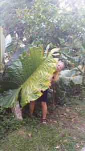 Koh Lanta Thailand Coast Plants