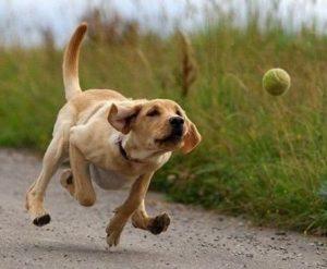 Dog_Fetching_Trmd