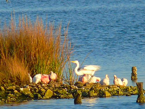 GBRV Island Birds2
