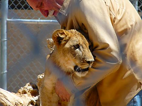 Lion Habitat Ranch 18