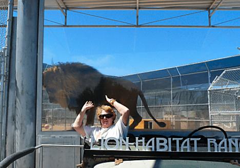 Lion Habitat Ranch 3