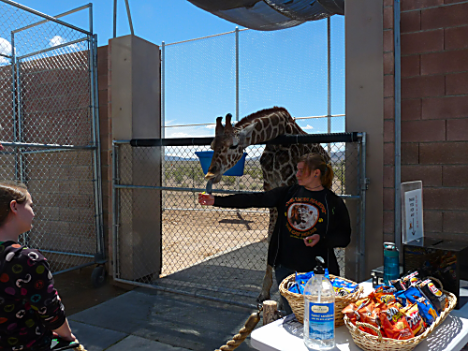 Lion Habitat Ranch 7
