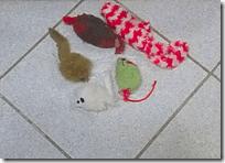 Karma mice