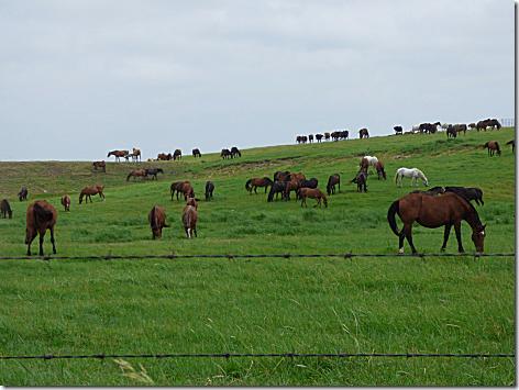 Drummond Ranch Mustangs 1