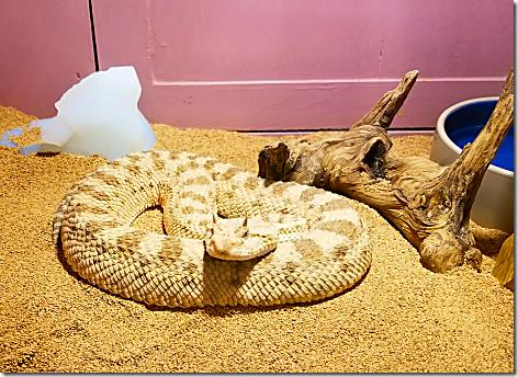Reptile Gardens Snake 1