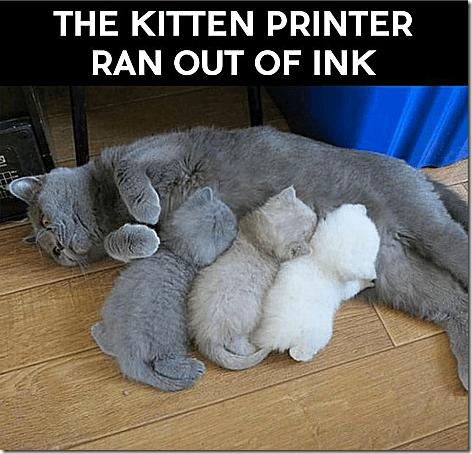 Kitten Printer