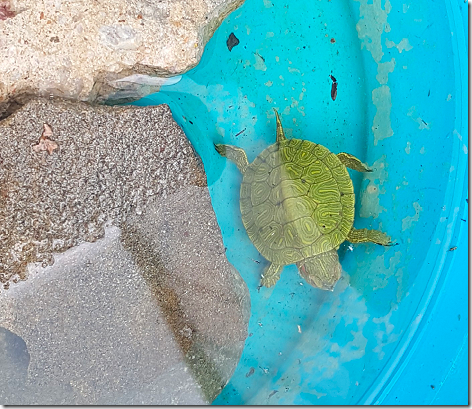 Chris Turtle 1