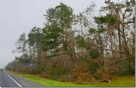 Hurricane MichaelTrees 1