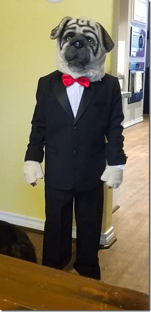 Landons Pug Morrison Halloween Costume