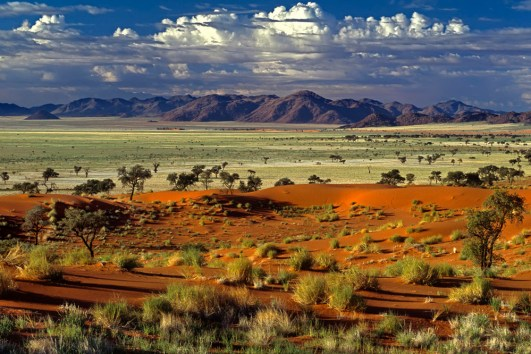 Tok Tokkie desert