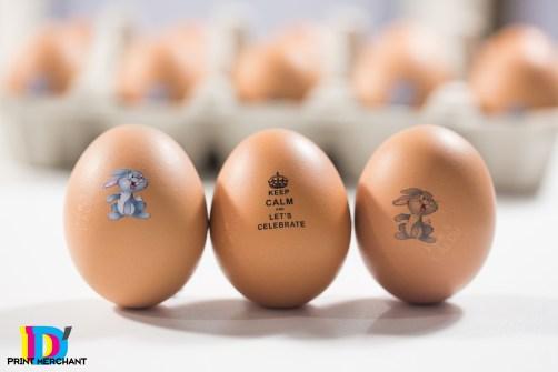 Eggs with carton WM