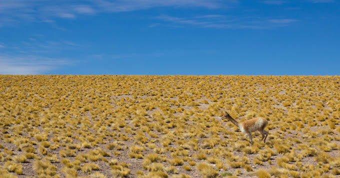 Chile blog-19