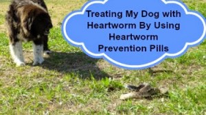 My Dog's Experience with Heartworms