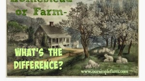 Homestead or Farm – What's the Difference?