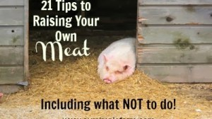 21 Tips to Raising Your Own Meat – Including What Not to Do!