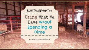 Barn Transformation – Utilizing What We Have w/out Spending a Dime