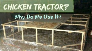 What is a Chicken Tractor and Why Do We Use It?
