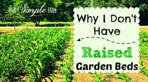Why I Don't Have Raised Beds