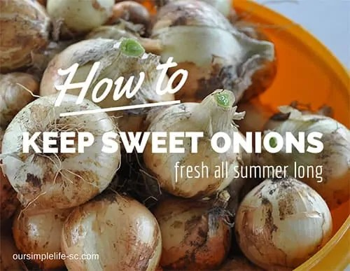 keep sweet onions fresh