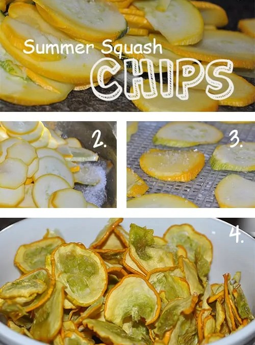 dried summer squash chips